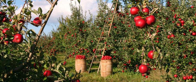 Mentorskapsprogram för företagare inom jordbruk, trädgård och rennäring