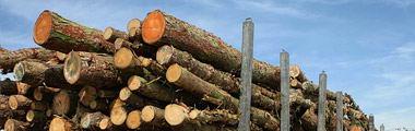Minskat regelkrångel för skogs- och jordbruket